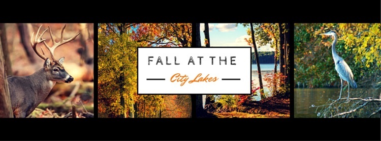 Fall at the City Lakes Banner