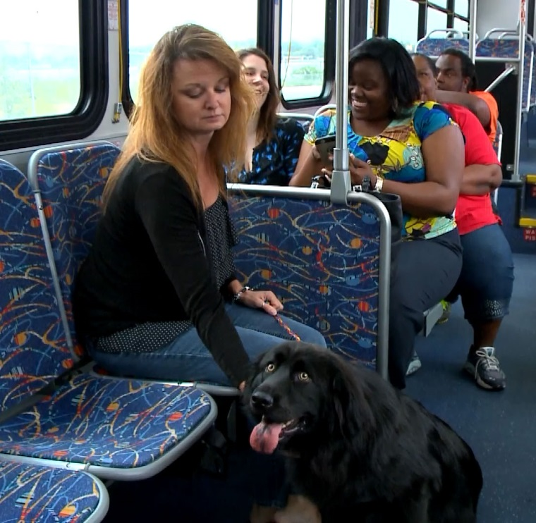 Service Animal on bus
