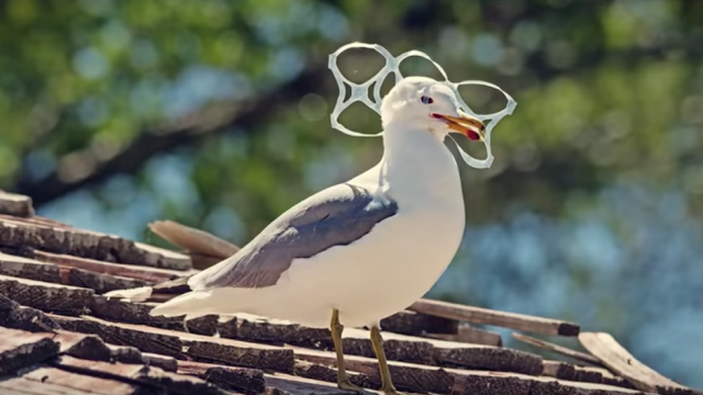 bird with ring