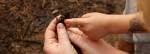 Hands in Nature